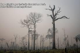Desmatamento acelerado pode levar à próxima pandemia